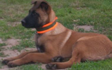 Marker za psa 1082